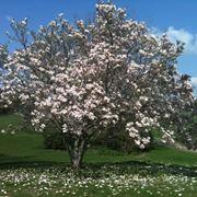 Terreno magnolia