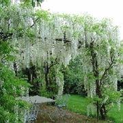 Progettazione giardini all'inglese-6