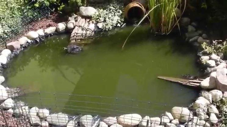 Laghetti d 39 acqua con animali giardino d acqua laghetti for Piscine laghetto per pesci