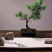 Complementi d'arredo giardini Zen-5