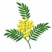 Domanda : Fiori della Mimosa
