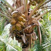 La palma: un albero antichissimo