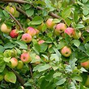Risposta: Potatura delle piante da frutto