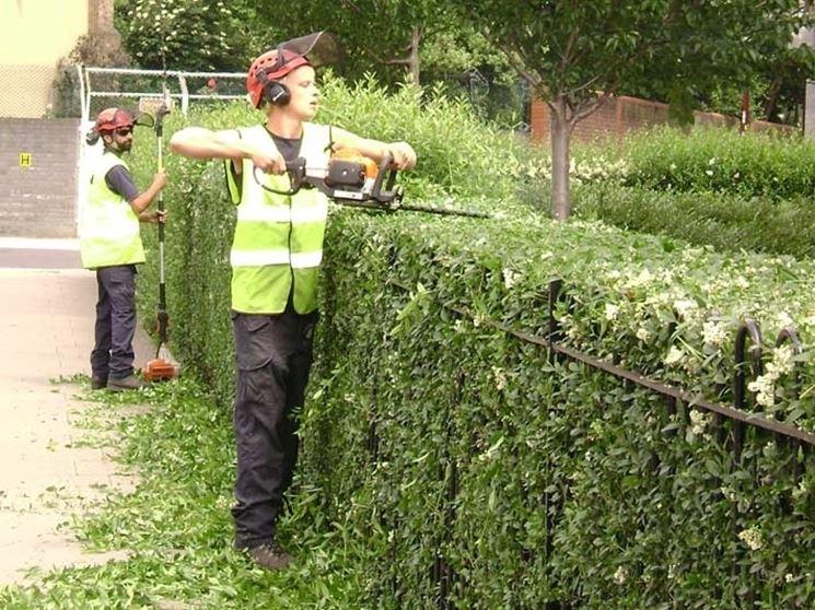 Tecniche di taglio siepi giardino taglio siepi 4 - Piante alte da giardino ...