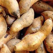 Le patate americane nell'orto