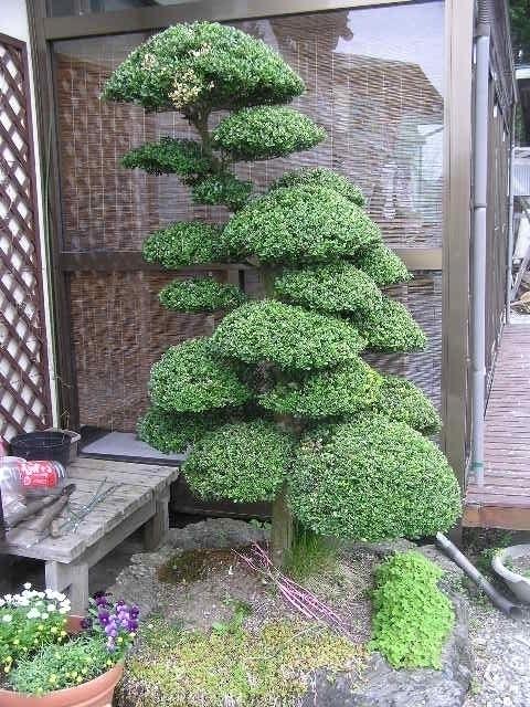 Piante Per Recinzioni Giardino.Piante Da Recinzione A Crescita Veloce Alberi Da Giardino A