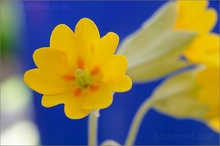 conoscere i fiori di campo piante fiori di campo 10