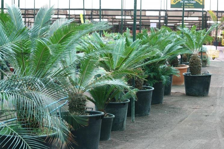 Piante ornamentali da esterno piante piante ornamentali da esterno - Piante ornamentali da giardino ...
